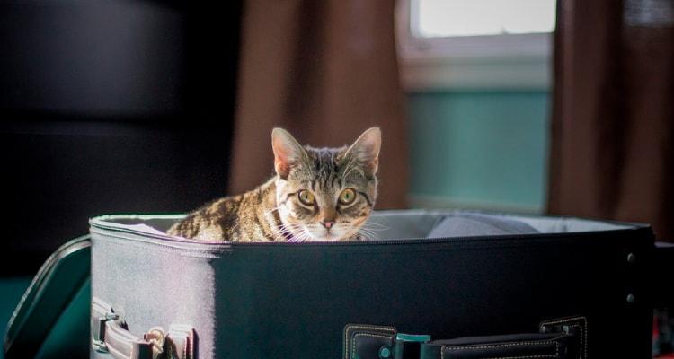 viajar com animais - passagens promo