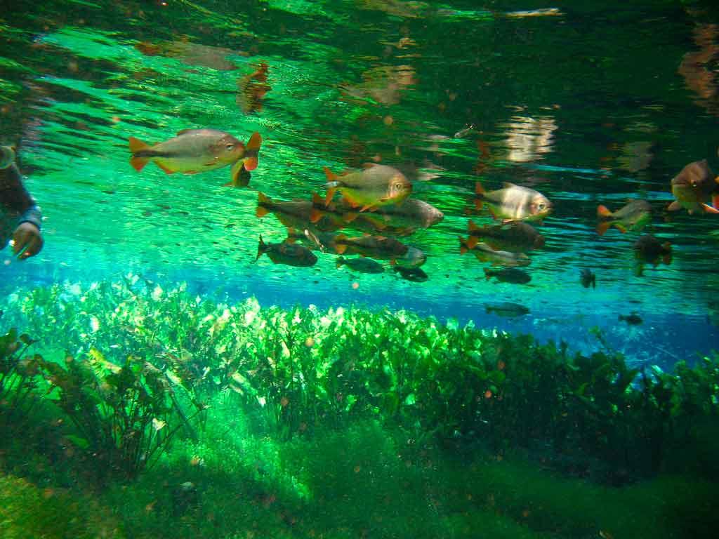 O que fazer em Bonito flutuação