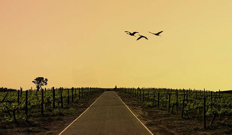 Stellenbosch é um excelente destino para os apreciadores de vinho conhecerem na África do Sul