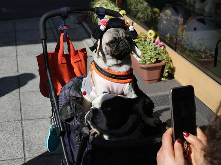 Viajar de avião com cachorro internacional