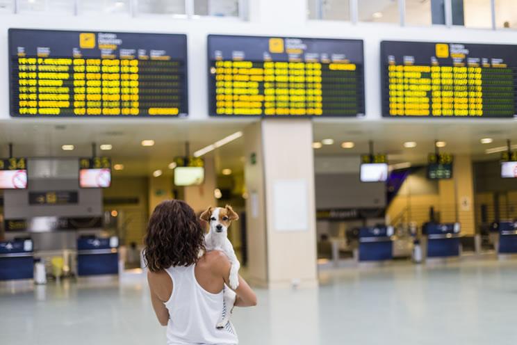 Comece a planejar sua viagem de avião com cachorro