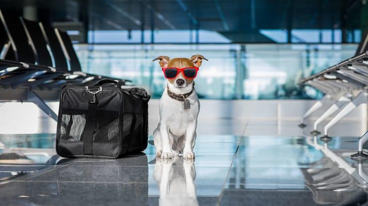 Como viajar de avião com cachorro: dicas, regras e precauções