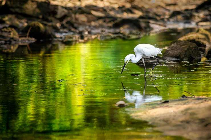 Trilhas de Turismo no Pantanal