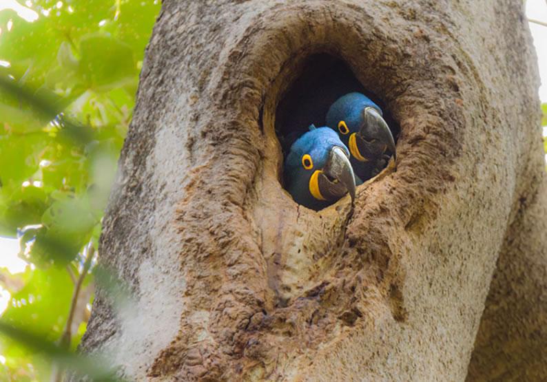 turismo no pantanal dicas