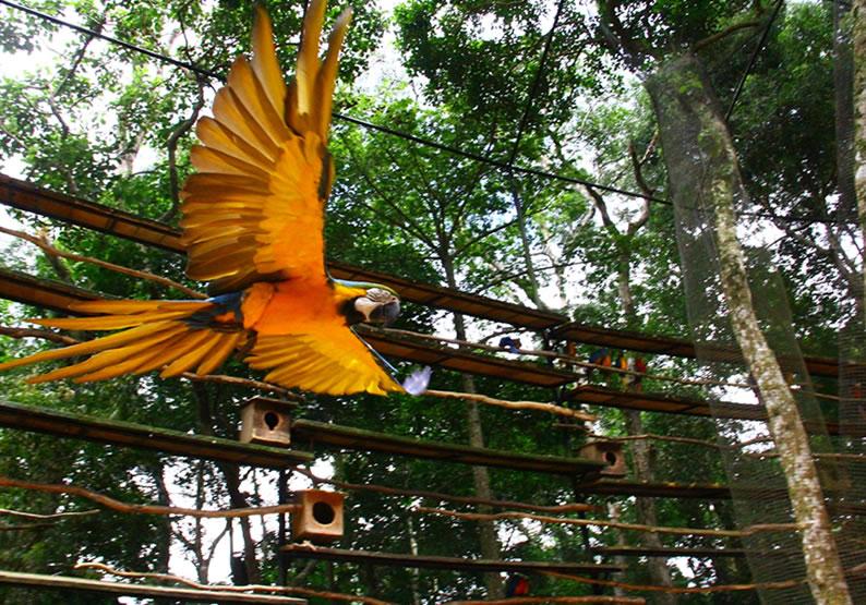 Foz do Iguaçu dicas de viagem