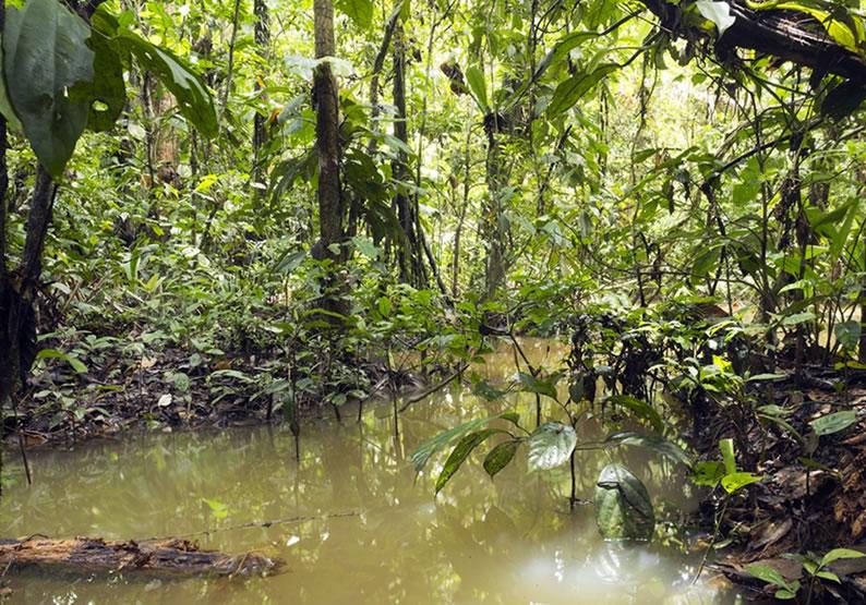 Manaus o que fazer