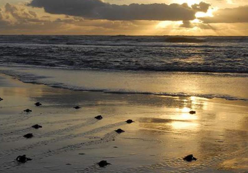 Melhores Praias Aracaju
