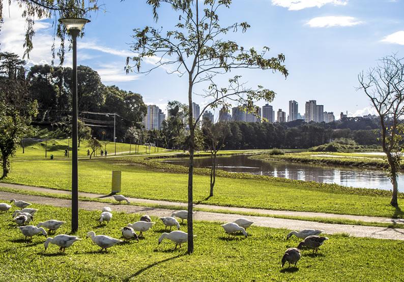 parques em Curitiba aceitam cachorro