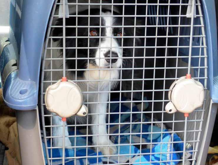 viajar com cachorro: cabine ou compartimento de carga?