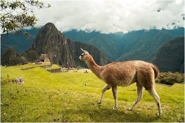 Dicas de viagem para Machu Picchu