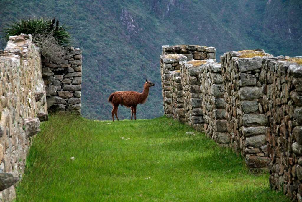 Foto de Cusco, em Machu Picchu