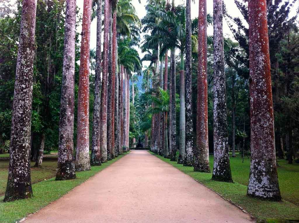 Jardim Botânico no Rio