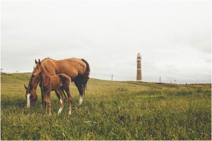 Turismo rural no Uruguai