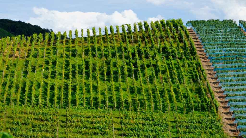 Vinícolas em Gramado