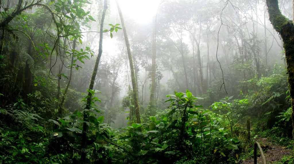Pontos turísticos de Manaus: natureza exuberante