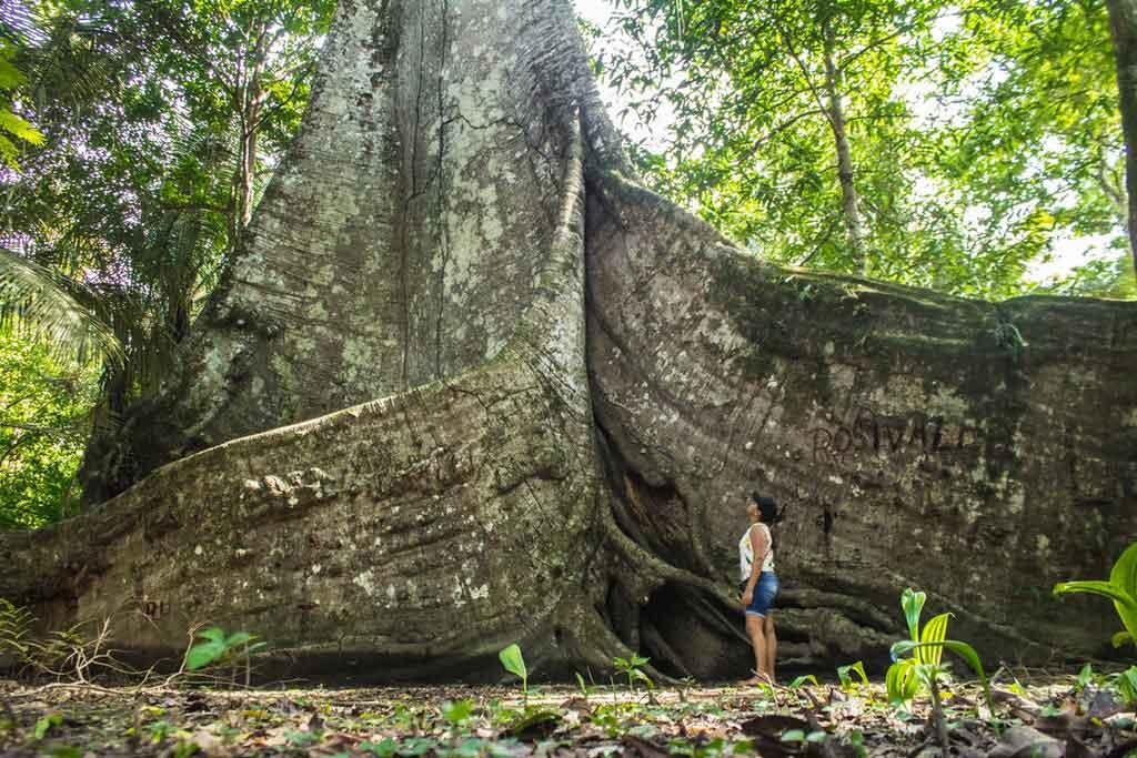 Turismo nas cidades da Amazônia