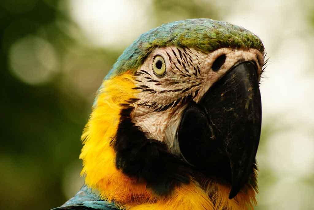 Quando ir fazer Turismo na Amazônia?