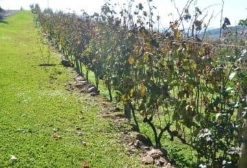 Vinícolas em Gramado: 10 destinos para conhecer no sul do país