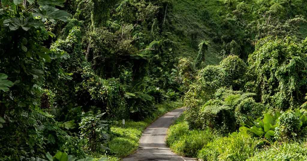 Porto Rico Floresta nacional El Yunque