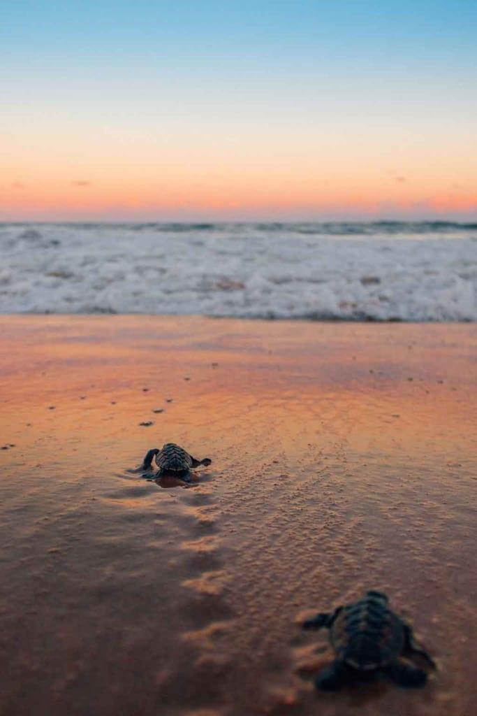 O que fazer em Búzios praia da ferradura