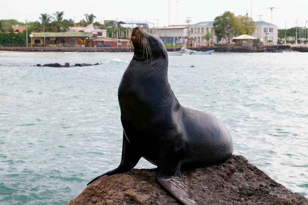 Ilha Galápagos quando ir
