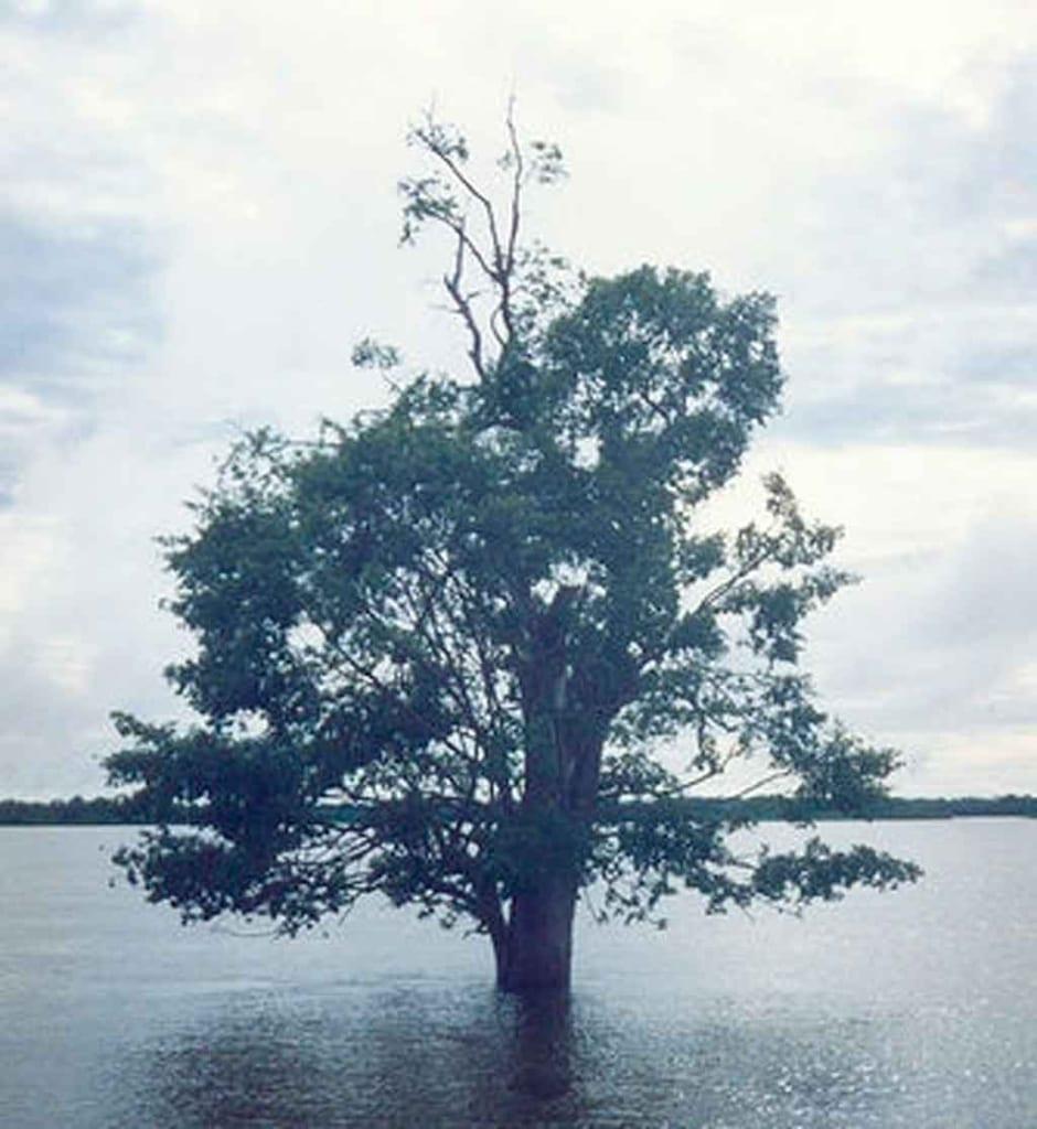 Turismo em Tocantins ilha do Bananal
