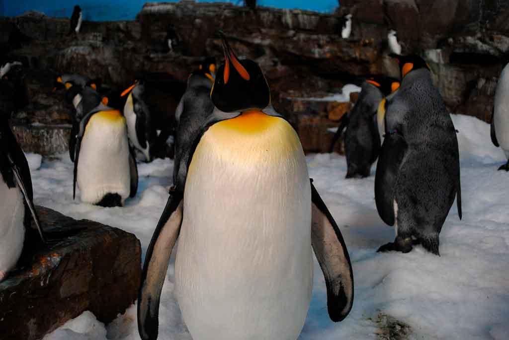 SeaWorld Orlando empire of the pinguim
