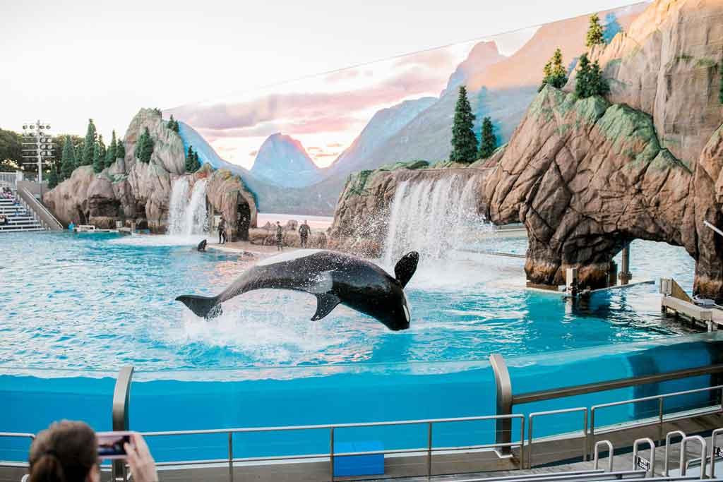 SeaWorld Orlando orca encounter