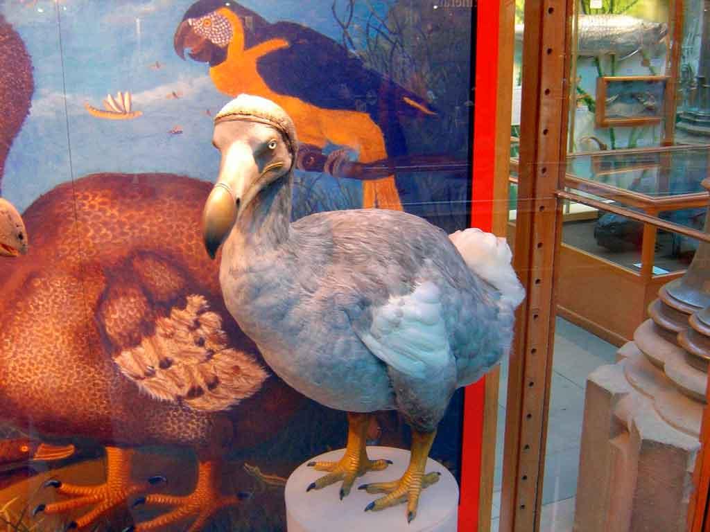 Ilhas Mauricios passaro dodo