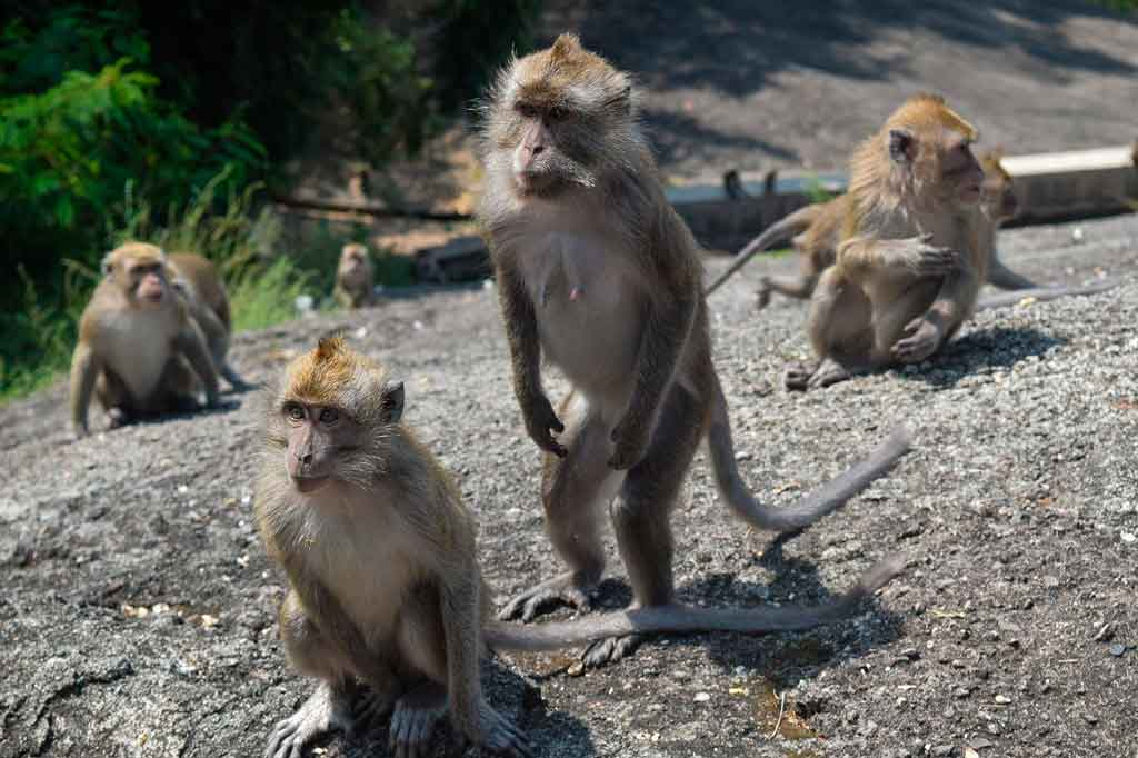 Indonésia Turismo floresta dos macacos sagrados