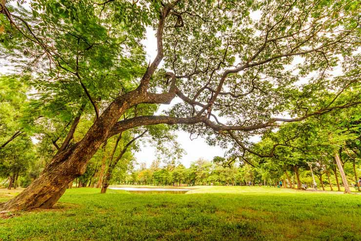 Parque Santo André, São Paulo