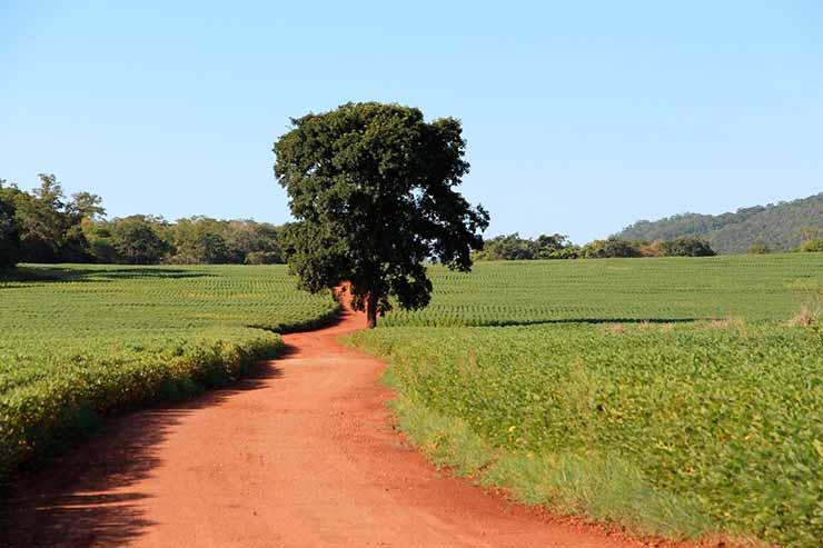 Mato Grosso do Sul Centro Oeste