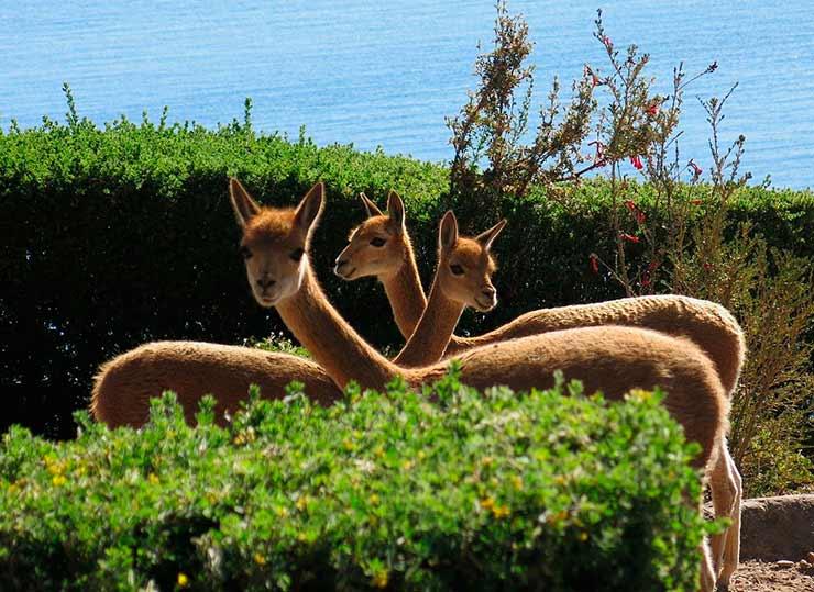 Lago Titicaca: curiosidades