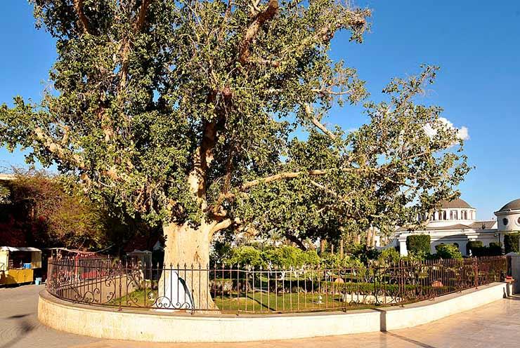 Árvore de Zaqueu